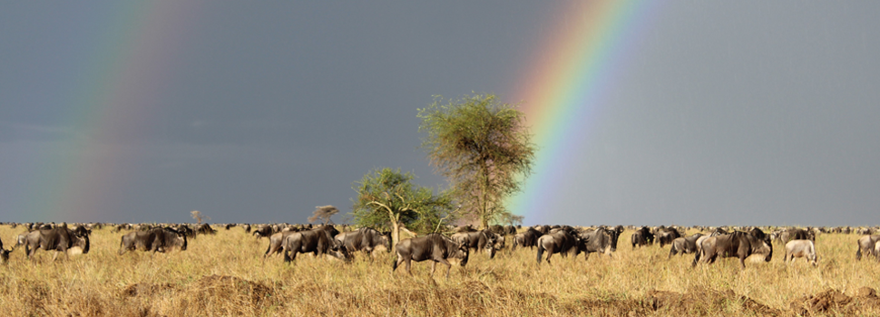 8 Day Lodge Safari - Wildebeest Migration in Serengeti National Park