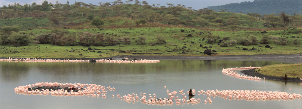 Arusha National Park - Momella Lakes & Flamingos